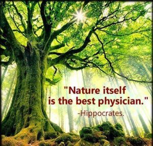 hippocrates nature best physician
