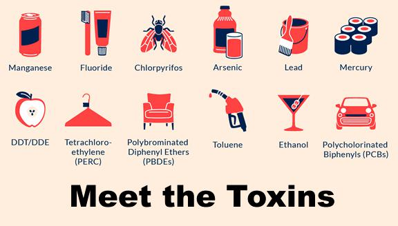 Toxins Effects In The Human Body